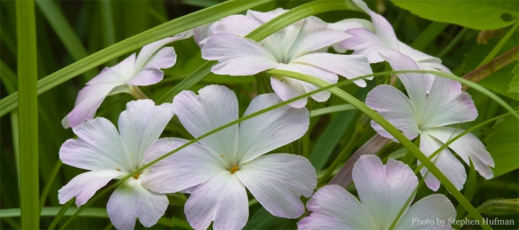 Phlox, the name does not come close to capturing the beauty.