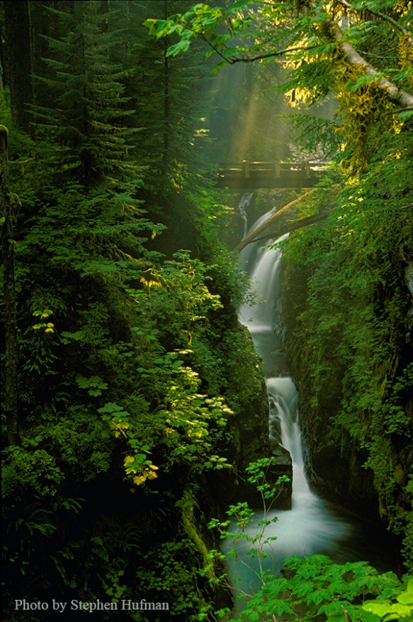 Olympic National Park, rain forest