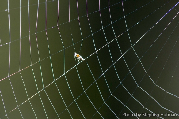 Spider web without the wind
