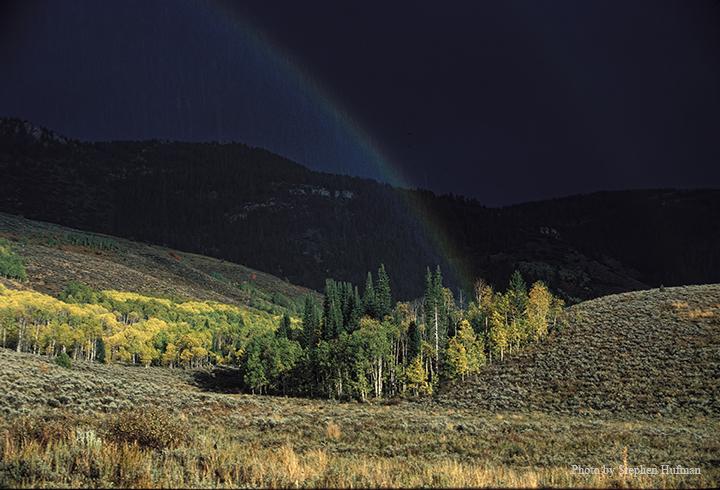 Rainbow coming from aspen grove