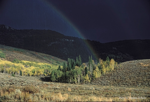 Rainbow coming from aspen grove