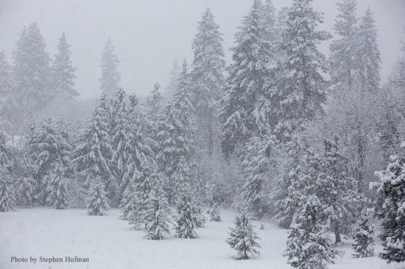 Heavy snow storm in the woods