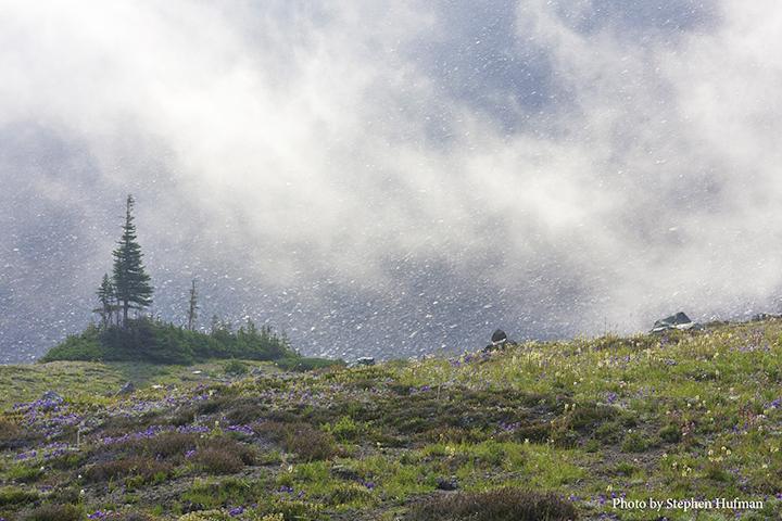 Mount Rainier-Berkeley Park
