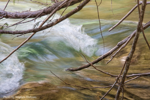 Cedar branches touching the stream