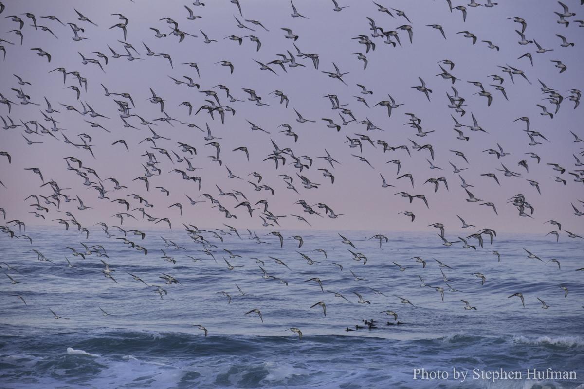 SH_180331-Monterey-3716