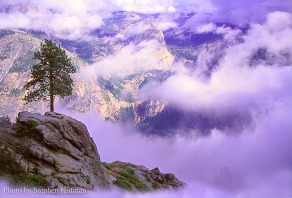 Lone pine overlooking Yosemite Valley, CA