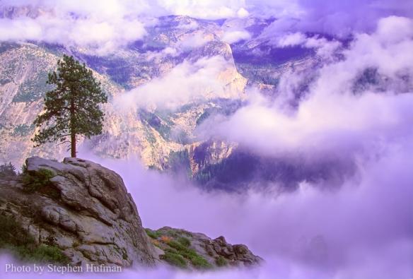 Lone pine overlooking Yosemite Valley, CA